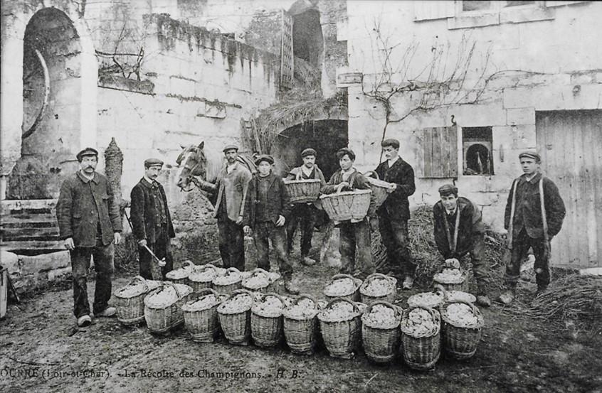 Ancienne photographie des travailleurs aux caves champignonnières de Bourré