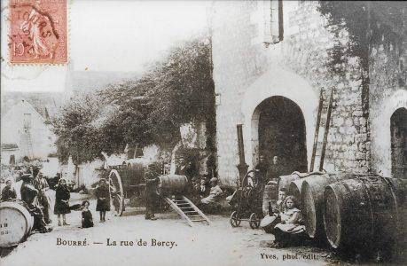 Vignes de Bourré